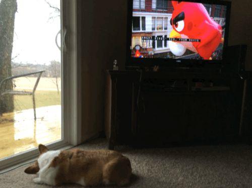 Daisy sleeping by the door